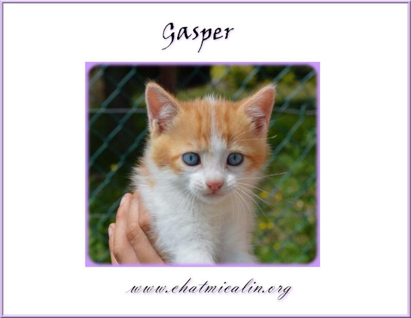 Tous nos adoptés en image Gasper10