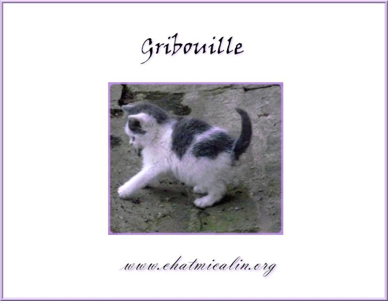 Tous nos adoptés en image Gribou10