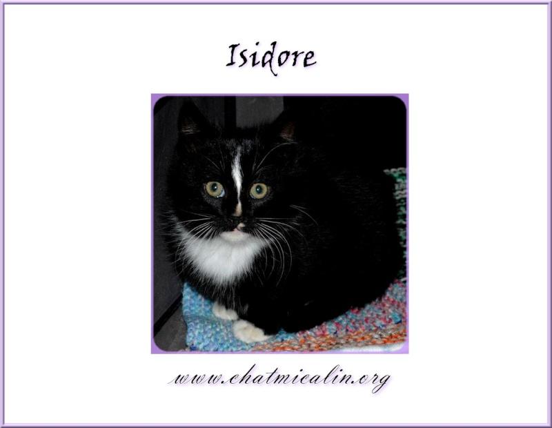 Tous nos adoptés en image Isidor11