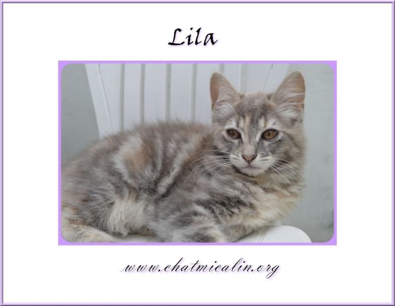 Tous nos adoptés en image Lila__10
