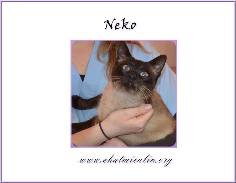 Tous nos adoptés en image Neko11