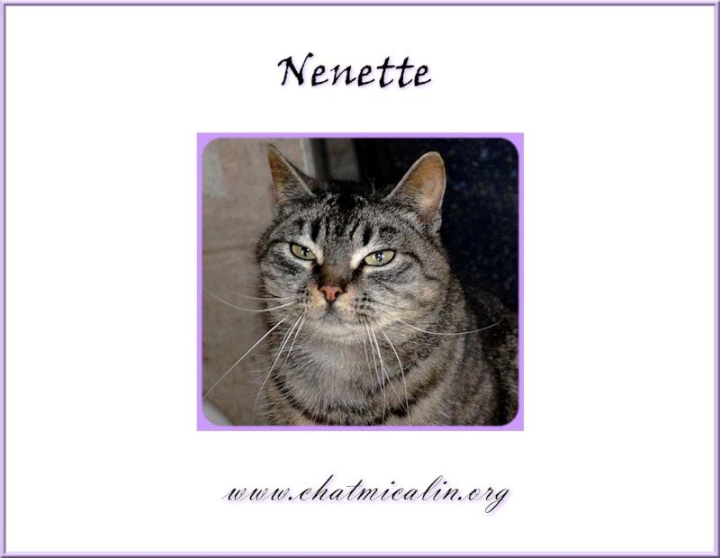 Tous nos adoptés en image Nenett10