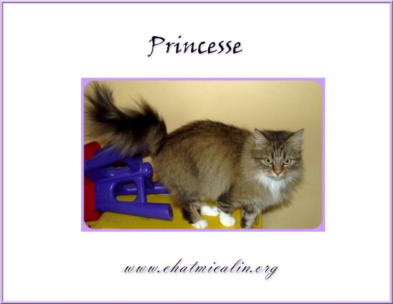 Tous nos adoptés en image Prince10