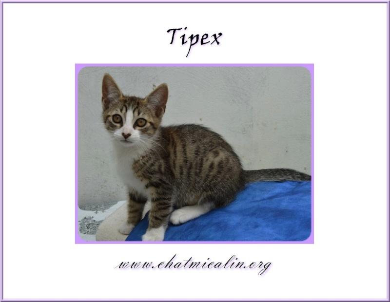 Tous nos adoptés en image Tipex_10