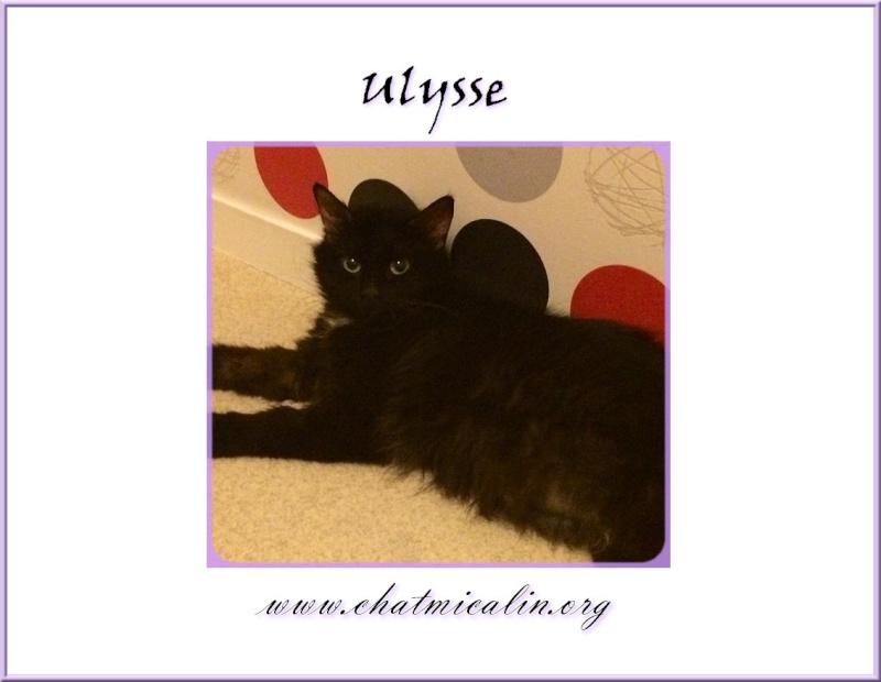 Tous nos adoptés en image Ulysse10