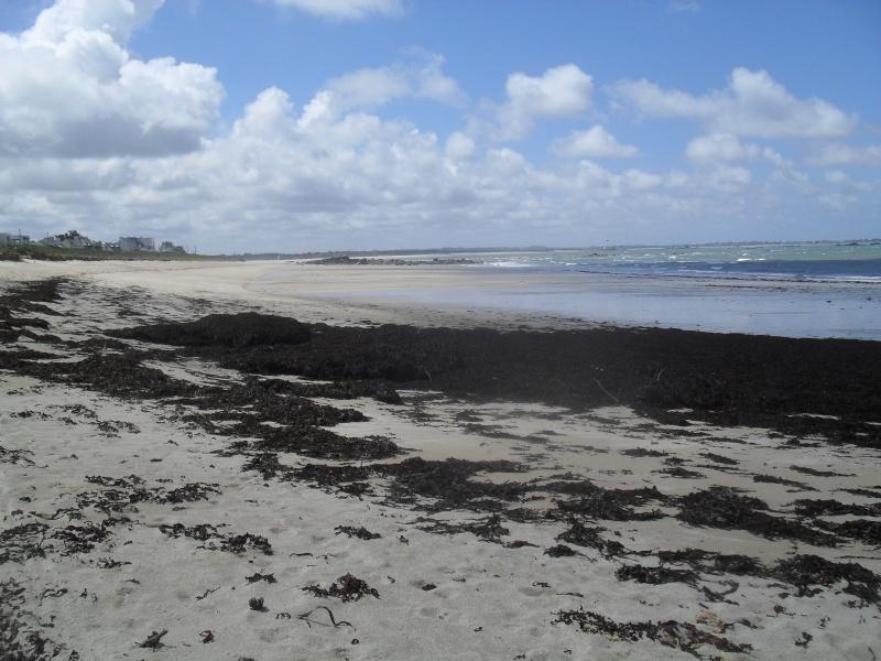 Vent et mer agitée :du goémon au rivage.... 00424