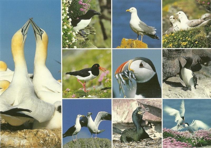 Au pays de Lorient  - Page 2 Numari16
