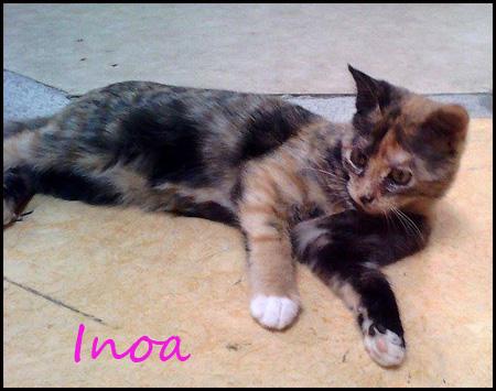 INOA Chaton 4 mois  16090410