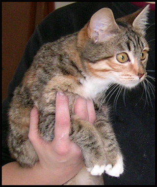 M2 Jolie chatounette rousse et blanche Dscn6633