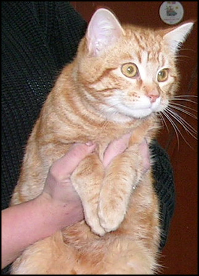 ABRICOT joli chaton roux Dscn6918