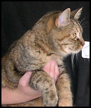 M5 chatoune tigrée M610