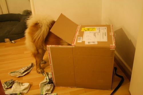Faire un cadeau à son chien - Page 5 Carton10