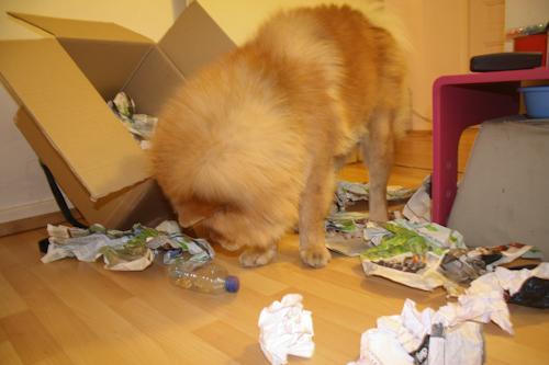 Faire un cadeau à son chien - Page 5 Carton11
