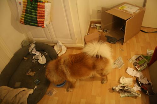 Faire un cadeau à son chien - Page 5 Carton12