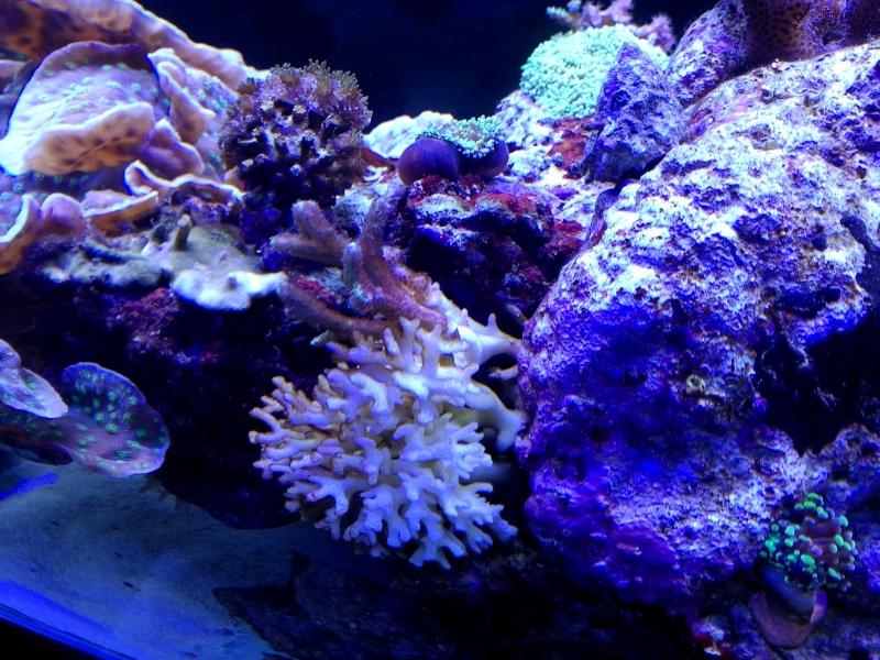 mais qui mange mes coraux? Img_2019
