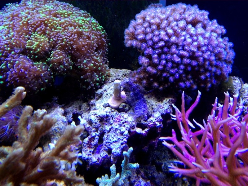 mais qui mange mes coraux? Img_2021