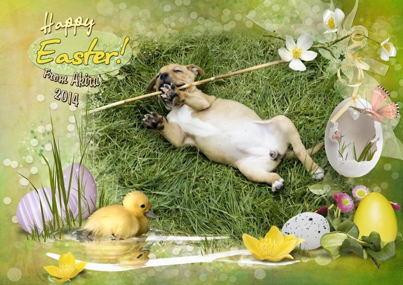 Happy 2014 Easter everyone from Akira  Akira-10