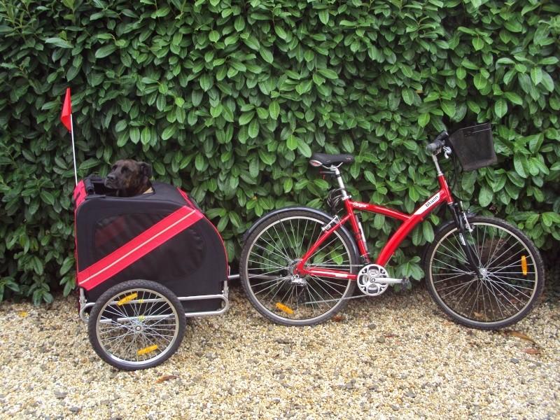 Modes de transport pour petits / vieux chiens qui fatiguent vite Dsc02510