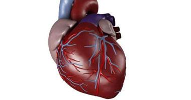 """""""أف"""".. كلمة خطيرة قد تقودك لأمراض القلب يوماً ما S4201210"""