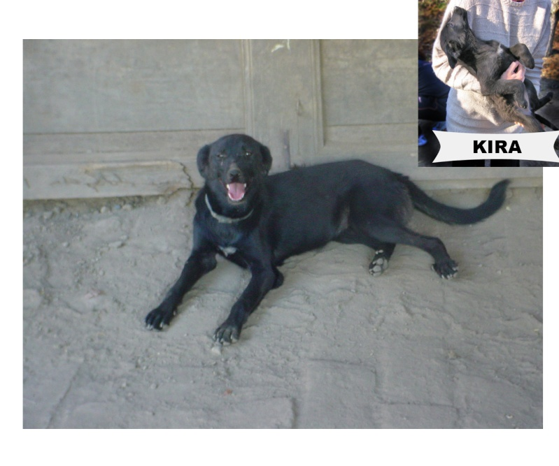 kira - KIRA F-X, moyenne, env. 16 kg, née 2011 (BACKA) - En cours adoption par Audrey B. (Départ78) Kirabb10