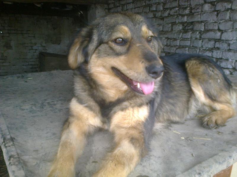 NEJRA, F-X, née mars 2013, 20kg (Etela) - En FA chez Nadine_10 (Départ10) Nejra_10