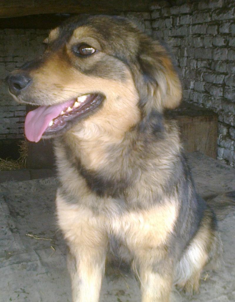 NEJRA, F-X, née mars 2013, 20kg (Etela) - En FA chez Nadine_10 (Départ10) Nejra_12