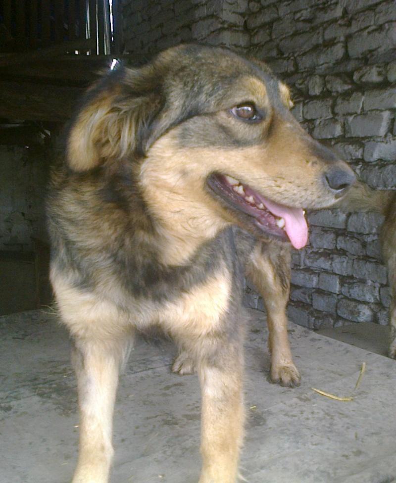 NEJRA, F-X, née mars 2013, 20kg (Etela) - En FA chez Nadine_10 (Départ10) Nejra_13