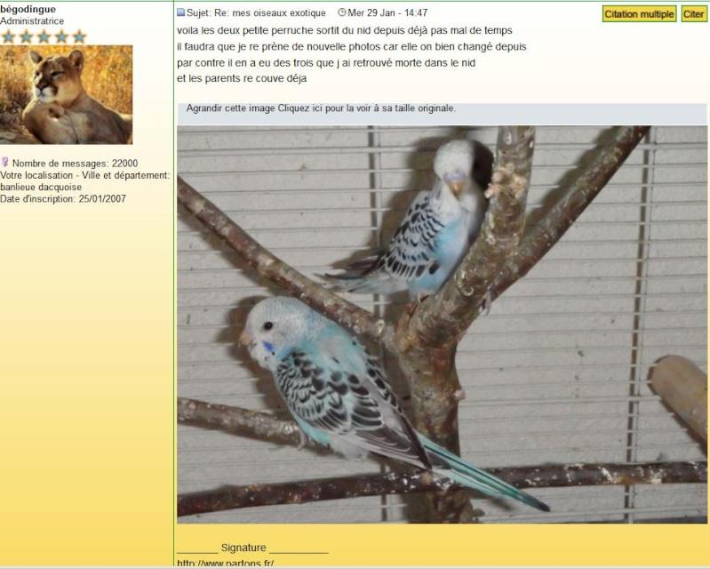 mes oiseaux exotique  - Page 10 Captur10