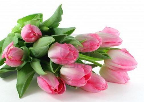 VENERDI 2 MAGGIO SALUTIAMOCI IN QUESTA SEZIONE Tulipa10
