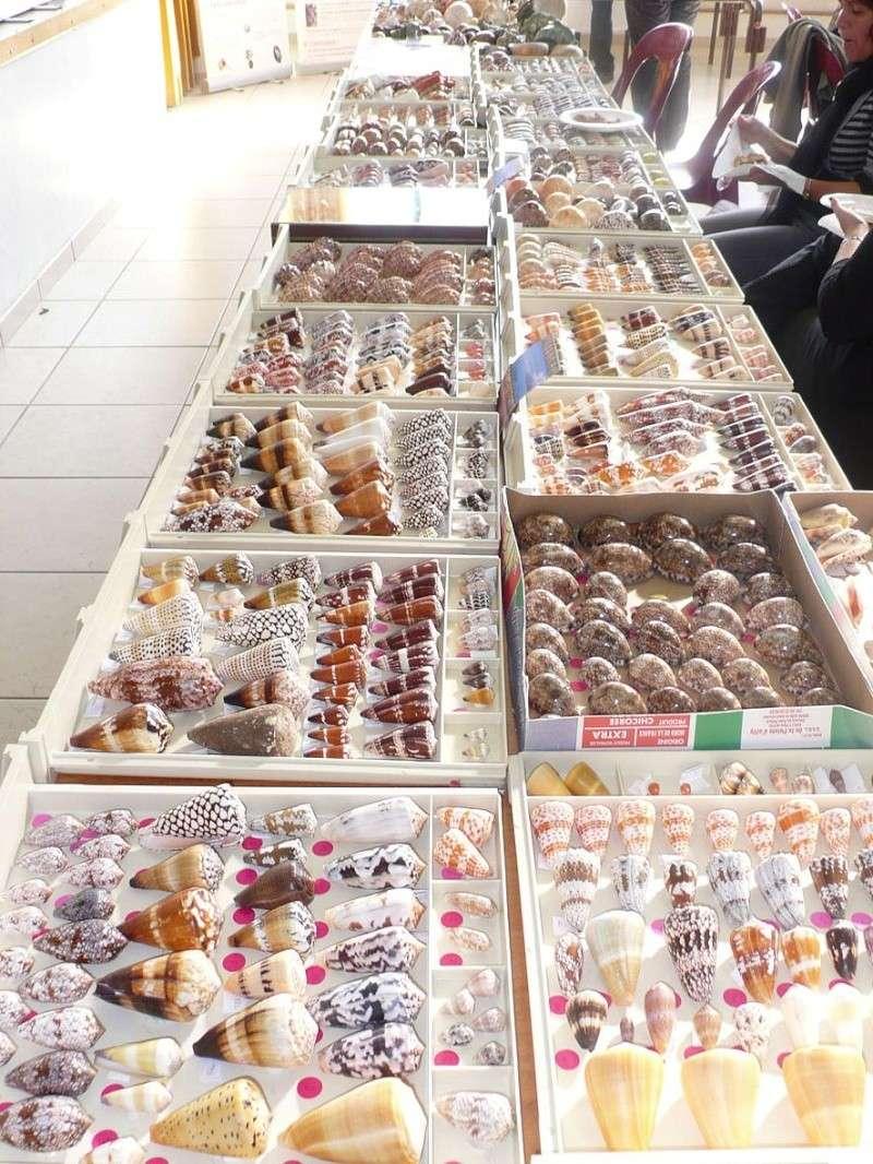 2013 Bourse de Berry au Bac / Reims - 12 & 13 octobre Berry_15