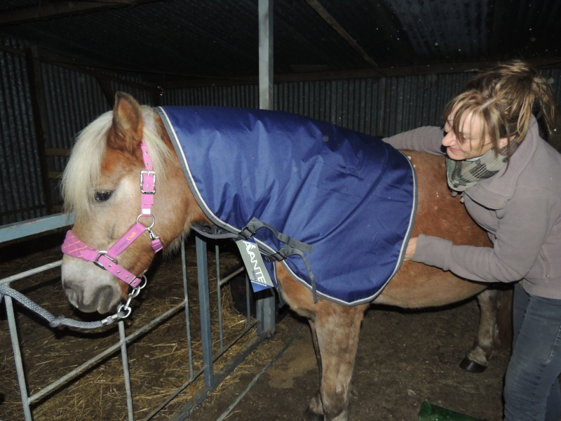 MELISSE - ONC typée Haflinger née en 2002  - adoptée en novembre 2013 par fannybis - Page 4 Dscn9513