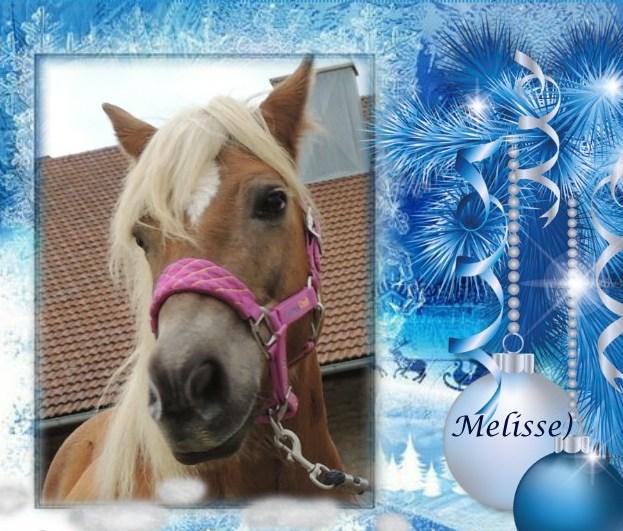 MELISSE - ONC typée Haflinger née en 2002  - adoptée en novembre 2013 par fannybis - Page 5 Merry_10