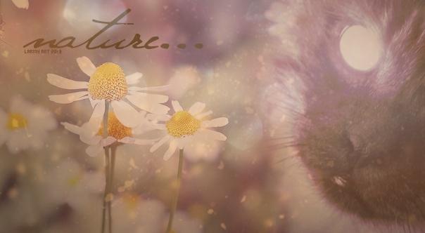 larmy art gallery ♪ Natur10