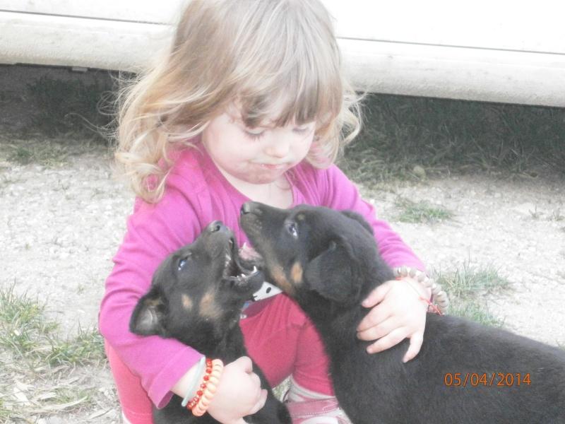 cherche chien ou chienne Mariec10