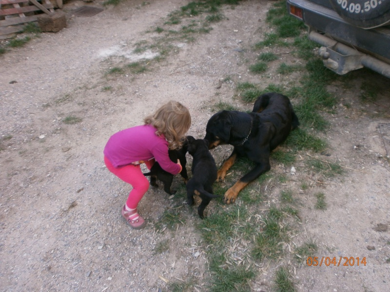 cherche chien ou chienne Mariec11