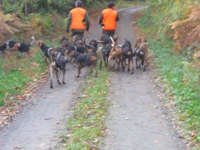Chasse fouet  27045110