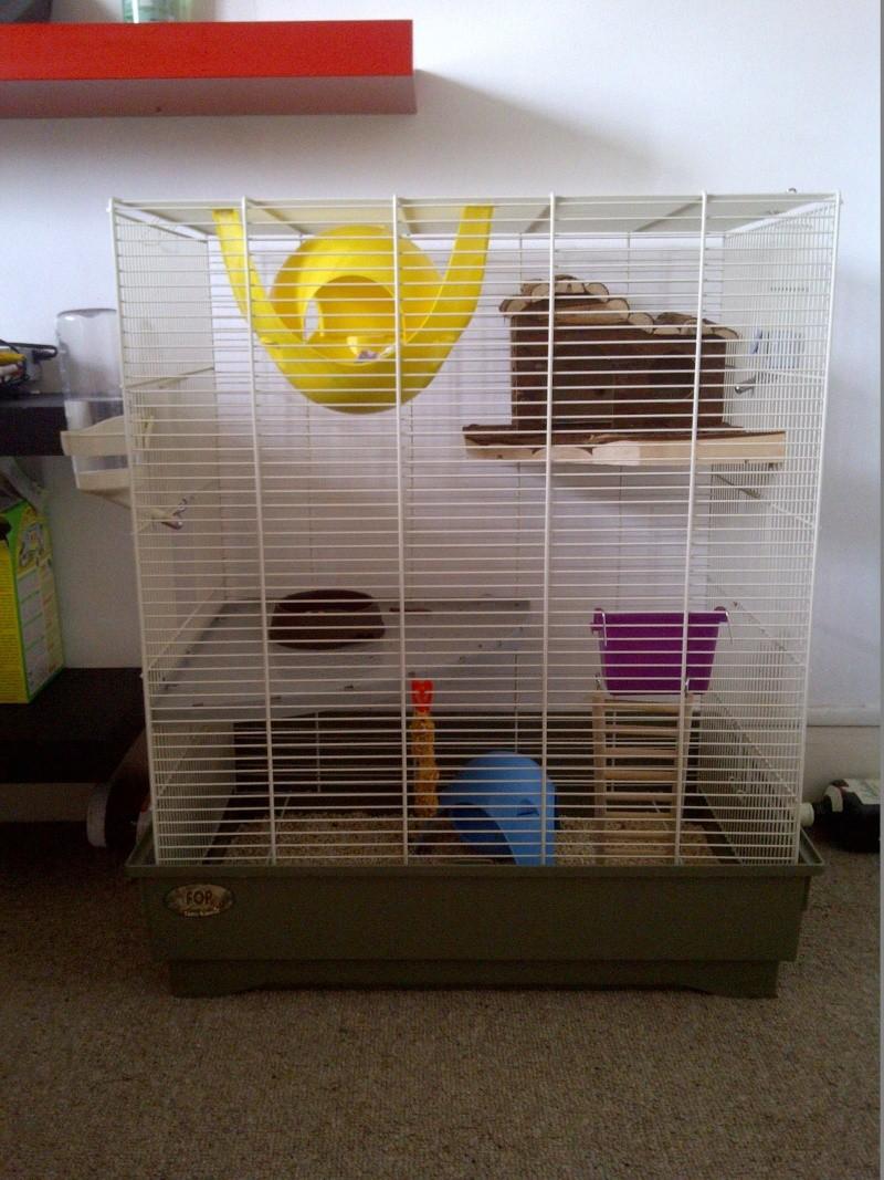 Cage pour rat de 75 cm de hauteur! Img-2013