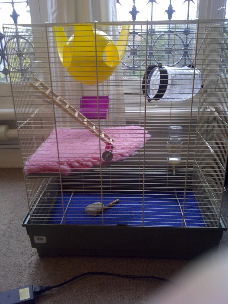 Cage pour rat de 75 cm de hauteur! Img-2014