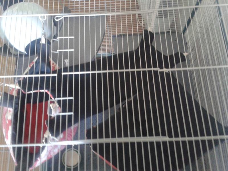 Cage Furet XL ou Furet KD 20140347