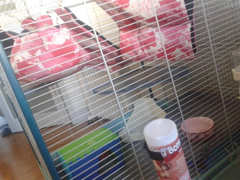 Cage Furet XL ou Furet KD 20140350