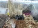 Выставка пауков-птицеедов Dsc04610