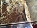 Выставка пауков-птицеедов Dsc04611