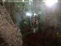 Выставка пауков-птицеедов Dsc04612