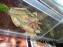 Выставка пауков-птицеедов Dsc04616