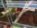 Выставка пауков-птицеедов Dsc04617