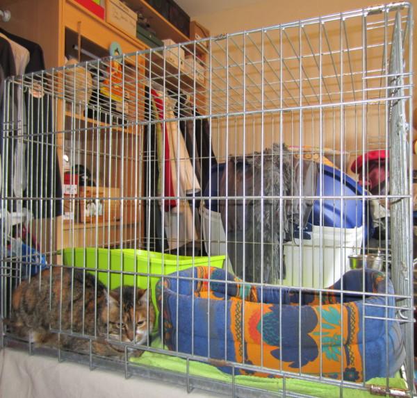 Cage de socio : prison ou refuge ? 001310