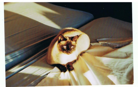 Photos des chats sauvés, avant/après - Page 2 13815010