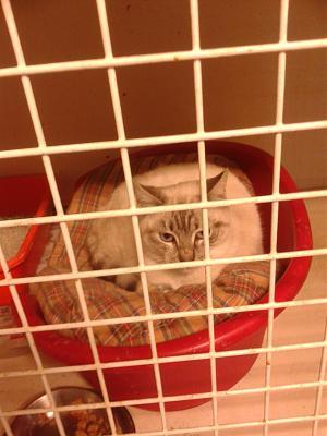 Photos des chats sauvés, avant/après - Page 3 20131211