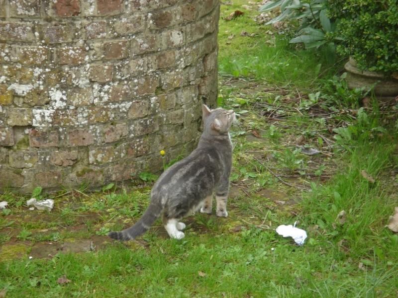 La devinette du mois : Quelle est la robe de ce chat ? - Page 3 Dsc06011