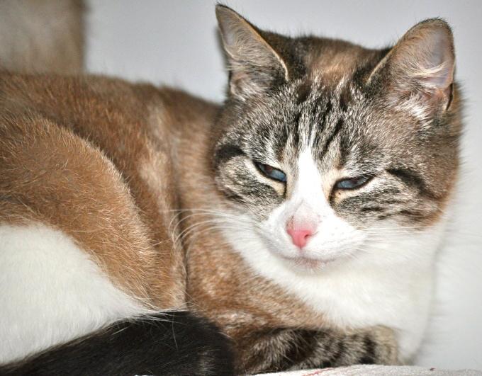 Photos des chats sauvés, avant/après - Page 3 Dsc_0012